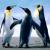 D-Penguin
