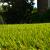 GreenPal Lawn Care of Baltimore